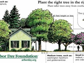 Wonderful Tree Placement In Front Yard - Google Search | Landscaping Small Trees To Plant Near House Picture