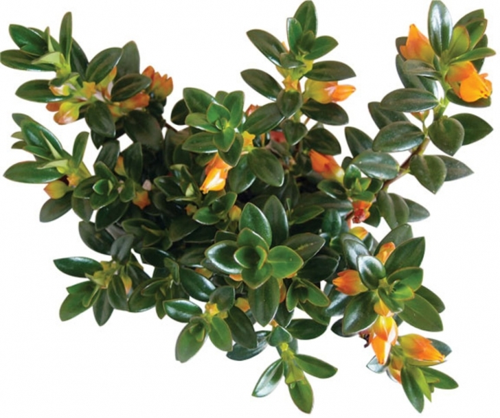 Classy 7 Best Houseplants For The Kitchen - Restoration & Design For The Great House Plants Photo