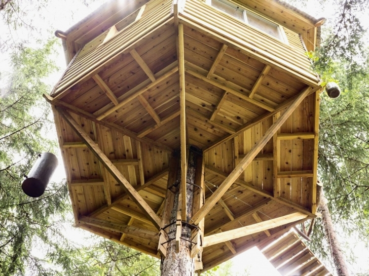 Cool Treehouse On Stilts Plans New Cool Tree House Plans Elegant Tree Tree House Plans Image