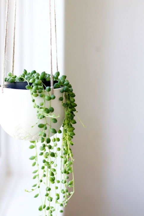 Good Plants In The Bedroom …   Plants In 2018… Hanging House Plants Photo