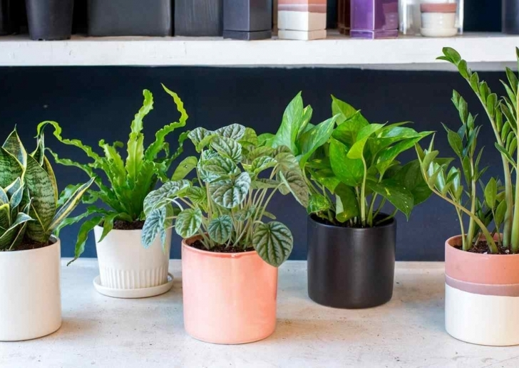 Inspirational Indoor Plants For Sale — Awesome House Lighting : Indoor Plants Low House Plants Low Light Pic