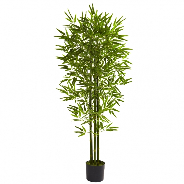 Interesting Bamboo House Plant – A Guide To Growing Bamboo Indoors | Zozeen Bamboo House Plant Image