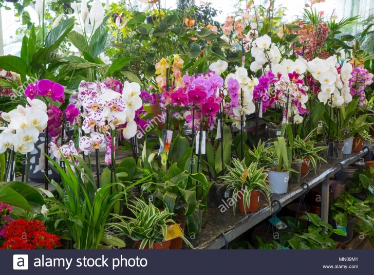 Must See A Variety Of Orchids And House Plants On Sale At A Garden Centre House Plants For Sale Image