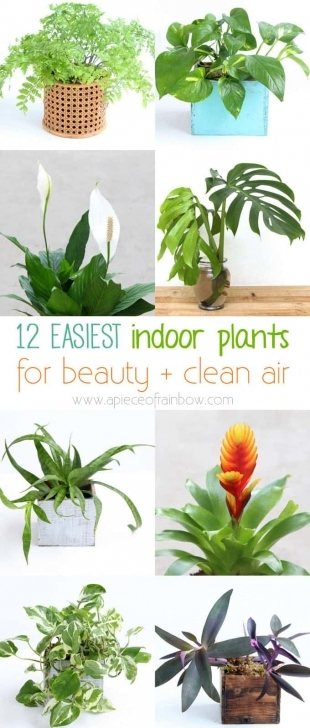 Wonderful 12 Easy Air Purifying Indoor Plants For Beauty + Well-Being - A The Best House Plants Pic